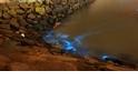 解開馬祖藍眼淚之謎──夜光蟲