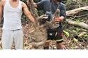 人神共憤,非法捕捉野生樹懶與黑市交易