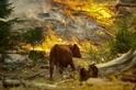野火燒屁股時,野生動物會做什麼?