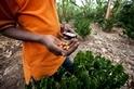 手機如何能有助於終結世界飢荒