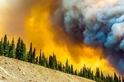 怵目驚心:熊熊野火