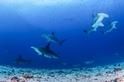 全球鯊魚種最豐富之地:加拉巴哥群島