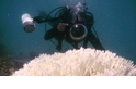 大堡礁九成以上出現礁體白化現象