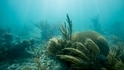 搶救珊瑚礁