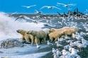 北極的爭食