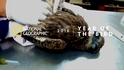 野鳥為什麼重要|生態紀錄片導演-梁皆得