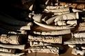 銷毀象牙真的能拯救大象嗎?
