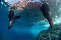 智利設立美洲最大的海洋保護區