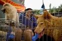 臺灣明文禁止吃狗肉──亞洲首例