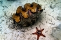 中國立法禁開採巨蚌,能否見效?