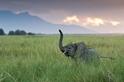 大象:無可匹敵的好鼻師