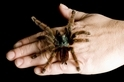 破除謠言:七個關於蟲蟲與蜘蛛的神話