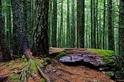 蒼蓊森林:冰河國家公園