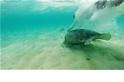 氣候變遷導致綠蠵龜變成「剩女」?
