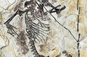 神祕生物的骸骨重新設定了哺乳動物的起源