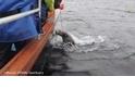 看救援人員拯救被釣魚線纏住的海豹
