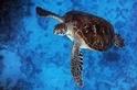 海龜研究在台灣