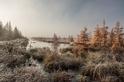 冰霧瀰漫的落葉松沼澤