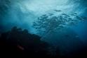 原始海域:萬藍中的一點紅