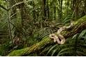 蛇的爬樹之道