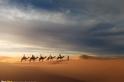 沙漠裡的隊伍