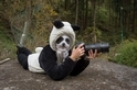 萌萌照不好拍:異常艱難的貓熊攝影任務