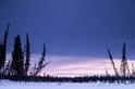 醉倒的樹:氣候變遷的驚人徵象