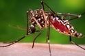 茲卡病毒:新型大流行帶來的新威脅