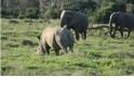大象找犀牛玩