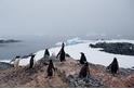 南極氣溫可能已創歷史新高