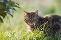 對爬行動物來說,貓咪可是冷血殺手