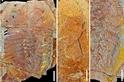 4億7000萬年前的腸子