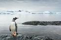 古代的氣候變遷,是否刺激了企鵝的演化?