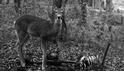 你有看過吃人骨的鹿嗎?