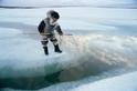 內建適應北極酷寒的基因?