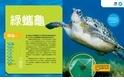 終極爬蟲百科:綠蠵龜