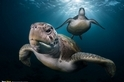 聚光燈下的烏龜
