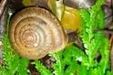 新發表物種「彩虹大臍蝸牛」,支持多元成家