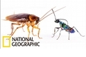 防禦屬性的蟑螂 VS 配備有「殭屍針」的扁頭泥蜂