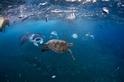 解決海洋垃圾的最佳辦法