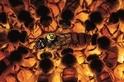 影像藝廊:打造超級蜜蜂