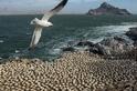 無憂棲地:納米比亞鑽石海岸