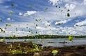 伊瓜蘇河上的彩蝶