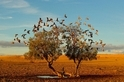沙漠綠洲:夢幻之樹