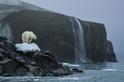 極北之星:北極熊