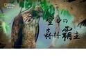 《人鳥之間》系列-空中的森林霸主:熊鷹