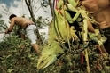 影像藝廊:追蹤東南亞兩棲爬蟲走私貿易