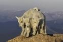 「四羊」成群