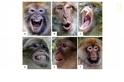 你真的懂猴子的情緒嗎?