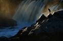 金色蒼鷺:黃昏的瀑布